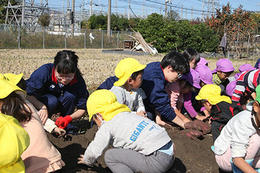 幼稚園のおいも掘りに普通科Ⅰ類三年生が参加しました!